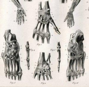 Le culte des os, symptôme majeur de l'anorexie.